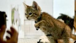 Kitten Stars of 'Keanu' in Hollywood Spotlight