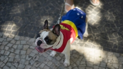 Parade for the Dogs: Brazil Holds Canine Costume Procession