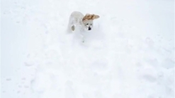 This Dog Is Having a Ball in the Snow