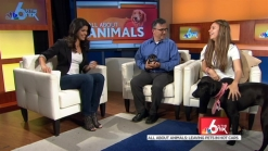 All About Pets: Pet Safety