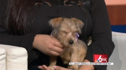 All About Animals: Spaying/Neutering Your Pet
