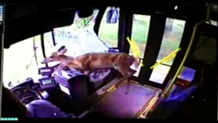 Dramatic Video: Deer Crashes Through Bus