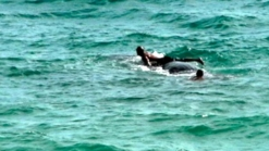 NOAA Slaps Warning on Man For Harassing Whale off Pompano Beach