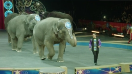 Ringling Bros. to Phase Out Iconic Elephant Act
