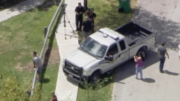 Large Alligator Captured in Southwest Miami-Dade Neighborhood