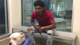 Noe Rivas Gets His Dog During Clear The Shelters