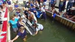 Twin Manatees Returned to Waters Off Florida Keys