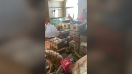 Police remove 3 kids, 245 animals from 'deplorable' home