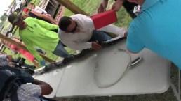 1000th Python Caught in Everglades