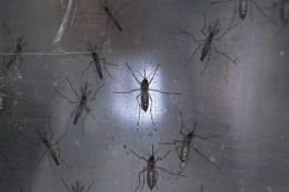 Florida Governor Declares Zika Emergency
