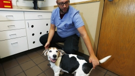 Veterinarians Seek Permission to Research Pot Meds for Pets