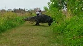 Massive Gator Sighting Brings Spotlight to Animal Preserve