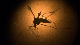 Puerto Rico Reports 1st Zika Death in US