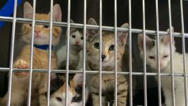 13 Kittens Found in a Bag Survive Extreme Heat