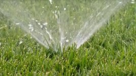 Rebate Mistake Could Cost SoCal Drought-Friendly Yard Seekers Thousands