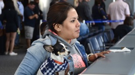 Delta: On Long Flights, Leave Your Support Animal at Home