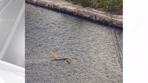 Florida Crocodile Spotted Lounging...On A Pool Noodle?