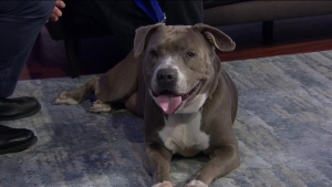 Athena from Broward Animal Care Needs a Home!