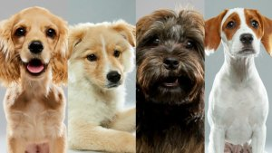 South Florida Animals Taking Part in Annual 'Puppy Bowl'