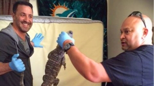 Officers Confiscate Gator While Executing Search Warrant