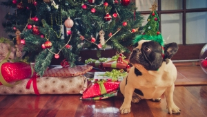 'What Do I Want for Christmas' and More Top Holiday Googles
