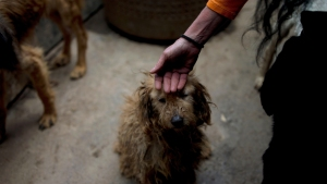 Venezuela Pets Go Hungry as Economic Crisis Deepens