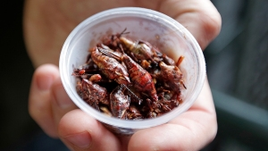 NYers Are Paying $12 to Eat Ice Cream Topped With Insects