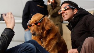 Prepare Your Pet For the Solar Eclipse