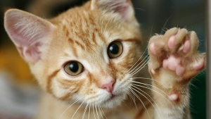 FL State Senator Files Bill to Outlaw Declawing of Most Cats