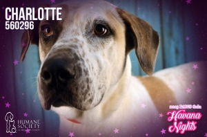 Humane Society of Broward County Pets of the Week - March 14