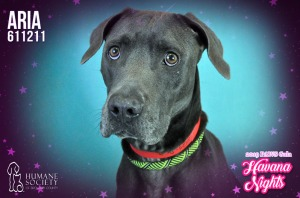 Humane Society of Broward County Pets of the Week - March 21