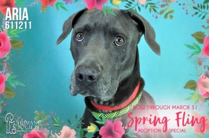 Humane Society of Broward County Pets of the Week - March 26