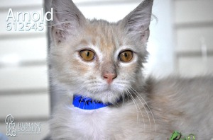 Humane Society of Broward County Pets of the Week - May 23