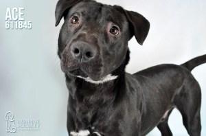 Humane Society of Broward County Pets of the Week - June 20