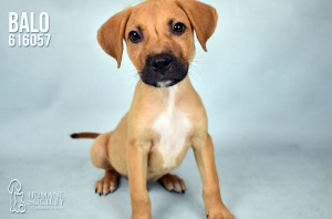 Humane Society of Broward County Pets of the Week - June 28