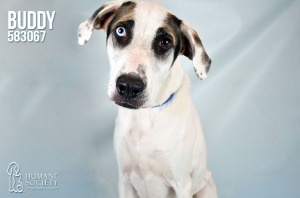 Humane Society of Broward County Pets of the Week - July 19