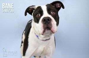 Humane Society of Broward County's Pets of the Week