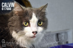 Humane Society of Broward County Pets of the Week - August 9