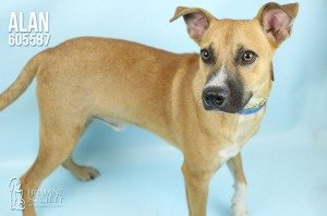 Humane Society of Broward County Pets of the Week - Nov. 30
