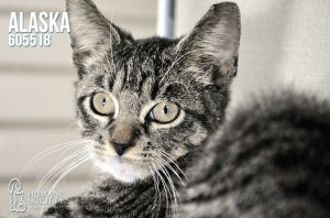 Humane Society of Broward Pets of the Week - December 6th