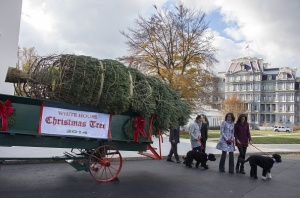 Official Christmas Tree Arrives at White House
