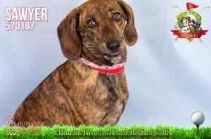 Humane Society of Broward County Pets of the Week