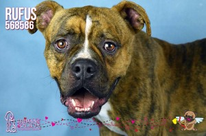 Humane Society of Broward County Pets of the Week - Feb. 10