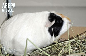 Humane Society of Broward County Pets of the Week - March 8