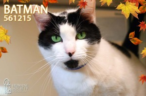 Broward Humane Society's Pets of the Week
