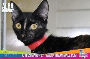 Humane Society of Broward County Pets of the Week - Feb. 7th