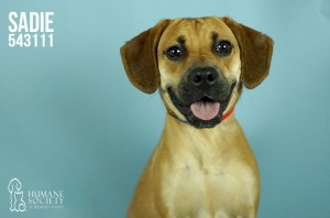 Broward Humane Society Adoptable Pets