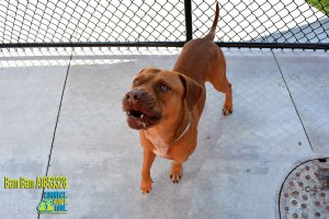 Miami-Dade County Animal Services Pets of the Week