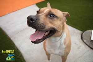 Miami-Dade Animal Services Pets of the Week - December 5th