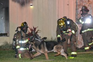 Dog Helps Rescue Two Children from C. Fla. House Fire